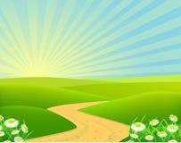 Nature chamomile background. Illustration of beautiful chamomile background Royalty Free Stock Images