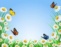 Nature chamomile background. Illustration of beautiful chamomile background Stock Photo