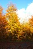Nature changes color Stock Photos