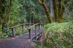 Nature che fanno un'escursione percorso fotografia stock libera da diritti