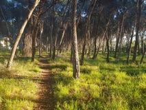 Nature& x27 ; chemin de s image libre de droits