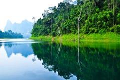 Nature chez KhaoSok, Thaïlande Photo libre de droits