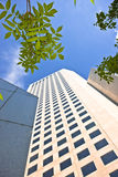 Nature Among the City. Tall building with bright blue sky and foliage Royalty Free Stock Photo