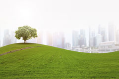 Nature in the city Stock Photography