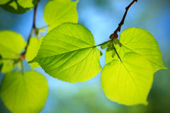 Nature close-up Stock Image