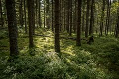 Nature close up in forest Stock Photography