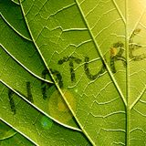 Nature. Close up of a green leaf with 'nature' written on it royalty free illustration
