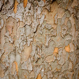 Nature. Closeup of dry rough bark of old tree Royalty Free Stock Photography