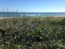 Nature at The Coast Stock Photo