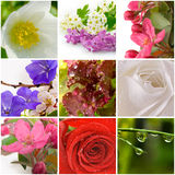 Nature collage. Beautiful nature collage of nine photos Stock Photography