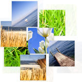 Nature collage. Royalty Free Stock Photo