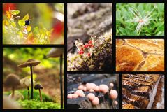 Nature Collage. Details of forest nature in collage Stock Images