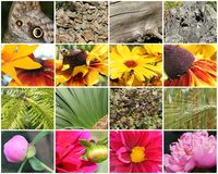 Nature collage Royalty Free Stock Photo