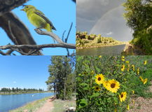 Nature Collage Stock Image