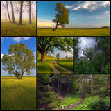 Nature collage representing trees and forest in summer and sprin Stock Images