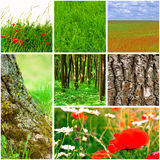 Nature collection Stock Image