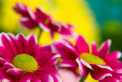 Nature colors. Nice colorful flower background Royalty Free Stock Photography