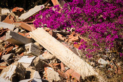 Nature comeback. Nature coming back on a heap of rubble Royalty Free Stock Photo