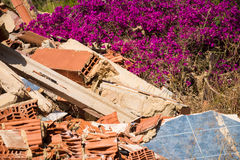 Nature comeback. Nature coming back on a heap of rubble Royalty Free Stock Photos