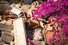 Nature comeback. Nature coming back on a heap of rubble Royalty Free Stock Photography