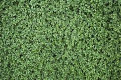 Closeup green fern garden. Nature concept background of closeup green fern garden Stock Image