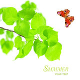 Nature concept - butterfly and green leaves Stock Photos