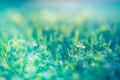 Nature banner. Fresh green grass for nature environment concept royalty free stock photography