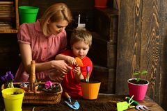 Nature concept. Family plant spring flowers in pot, nature. Beauty of nature. Nature of plants.  royalty free stock image