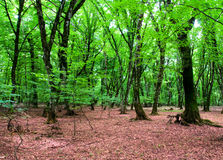Nature concept - Green forest. During bright summer day Royalty Free Stock Photo