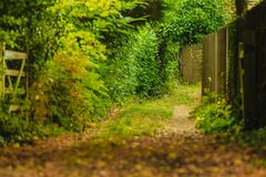 Peaceful path in autumnal forest or park Stock Photography