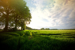 Nature concept. Summer field with green trees. Nature concept Stock Photo