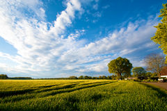 Nature concept. Summer field with green trees. Nature concept Royalty Free Stock Image