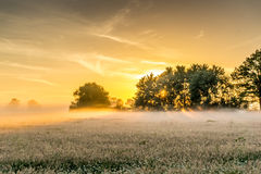 Nature conservation area at sunrise. With fog Royalty Free Stock Images
