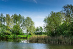 Nature conservation area with trees a small lake at sunshine Royalty Free Stock Images
