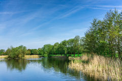 Nature conservation area with trees a small lake at sunshine Royalty Free Stock Image