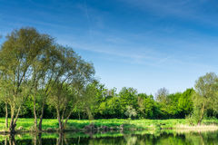 Nature conservation area with trees a small lake at sunshine Stock Images