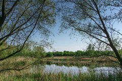 Nature conservation area with trees a small lake at sunshine Stock Photos