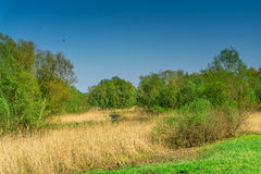 Nature conservation area with trees a small lake at sunshine Stock Image