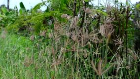 Nature contains grass swaying and sound of insects and birds. The nature contains grass swaying and sound of insects and birds stock footage