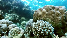 Nature, The corals and fish. Coral reef. Exotic fishes. The beauty of the underwater world. Life in the ocean. Diving on a tropical reef. Submarine life. Clear stock video