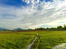 Nature in countryside. Paddy field ,Sky  and mountain Stock Image