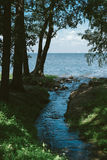 Nature: creek empties into the Gulf.  stock photo