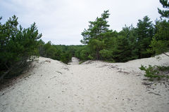 Nature in The Curonian Spit. On Russian side Stock Photography