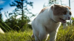 In nature, the cute cat was royalty free stock photos
