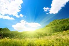 Nature d'été Photo libre de droits