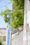 Nature d'été de Cat Rhodos Greece Image libre de droits