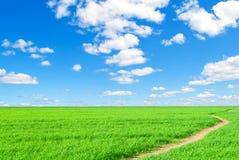 Nature d'été de fond, horizontalement. Images libres de droits