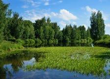 Nature d'été, paysage Photos stock