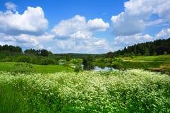 Nature d'été, paysage avec des wildflowers Image stock