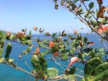 Nature d'île de Lombok et vue de mer Photo libre de droits
